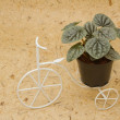 Stock Photo: House plant on vintage bicycle for decoration