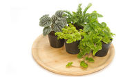 Group of house plants in a wooden tray — Stock Photo
