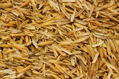 Rice husk,cultivating materials — Stock Photo