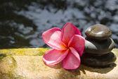 Spa concept zen basalt stones — Stock Photo