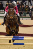 Masters Tournament International Jumping Competition — Stock Photo