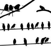 Birds on Wires, silhouette set — Stock Vector