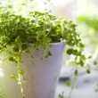 Beautiful green plant - Stock Photo