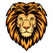 Lion Head — Stock Vector #18032229