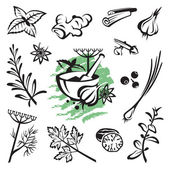 Herbs and spices — Vector de stock