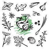 草药和香料 — 图库矢量图片