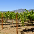 Napa Vineyard — Stockfoto