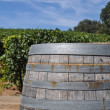 Wine Barrel and Vineyard — Stock Photo #13121678