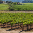 Napa Valley Vineyard — Foto Stock
