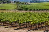 долине напа виноградник — Стоковое фото