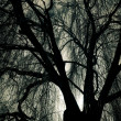Scary Weeping Willow Tree — Stock Photo #21605197