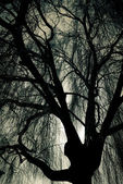 Scary Weeping Willow Tree — Stock Photo