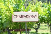 Znak winogron chardonnay — Zdjęcie stockowe