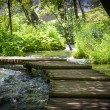 Stock Photo: Hiking Path on Wooden Trail