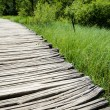 Stock Photo: Wooden Path in Forest