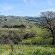 Napa Valley California Vineyard in Spring — Stock fotografie
