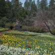 Cabin at Daffodil Hill Tourist Attraction California in Spring — Stock Photo