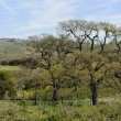 Napa Valley California Vineyard in Spring — Photo