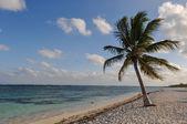 Plaj ve kum ile palmiye ağacı — Stok fotoğraf