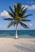 Palmeira com praia e areia — Foto Stock