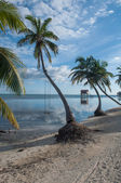 Palm Tree with Swing over the Ocean — Stock Photo
