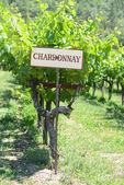 Chardonnay Grapes Sign — Stock Photo
