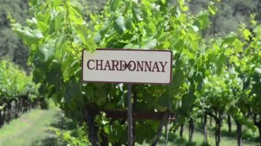 Chardonnay Grapes Sign — Stock Video
