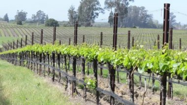 Napa Valley Vineyards — Stock Video