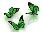 Three beautiful green butterfly — Stock Photo