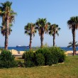 Seafront with palm — Stock Photo