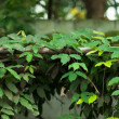 Green leaves — Stock Photo #33172591