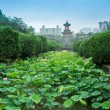 Stock Photo: Lotus in university of Sichuan, China