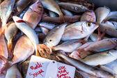 Mediterranean fish — Stock Photo