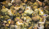 Boiled sea snails — Stock Photo