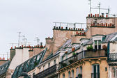 The famous Parisian rooftops — Stock Photo