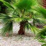 Baby palm tree — Stock Photo #21240277