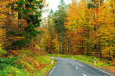 Forest road in mountains in fall — Stock Photo