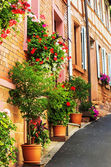 A steep alley adorned with geraniums — Stock Photo