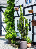 Green potted plants in front of half timbered house — Stock Photo