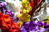 Renkli glayöl çiçek — Stok fotoğraf