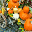 Stock Photo: Pumpkins arrangement on handcart