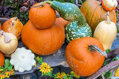 Pumpkins arrangement on handcart — Stock Photo
