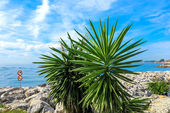 Landscape with palm trees in Marbella, Puerto Banus, holiday resort marina on Costa del Sol, Malaga province, Spain — Stockfoto