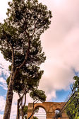 Pine trees in Rome — Stock Photo