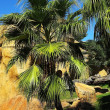 Palm tree in a tropical park — Stock Photo