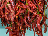 Dried red chili peppers — Stock Photo