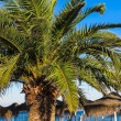 Palm tree and palm covered umbrellas — Stock Photo