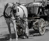 Horst carriage in black and white color — Stock Photo