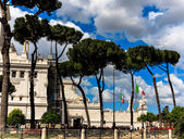Pine trees in Rome, near Piazza Venezia — Stock Photo