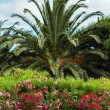 Colorful oleander and palm tree — Stock Photo #46649505